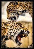 Jaguar: Temperamental by Flame-of-the-Phoenix
