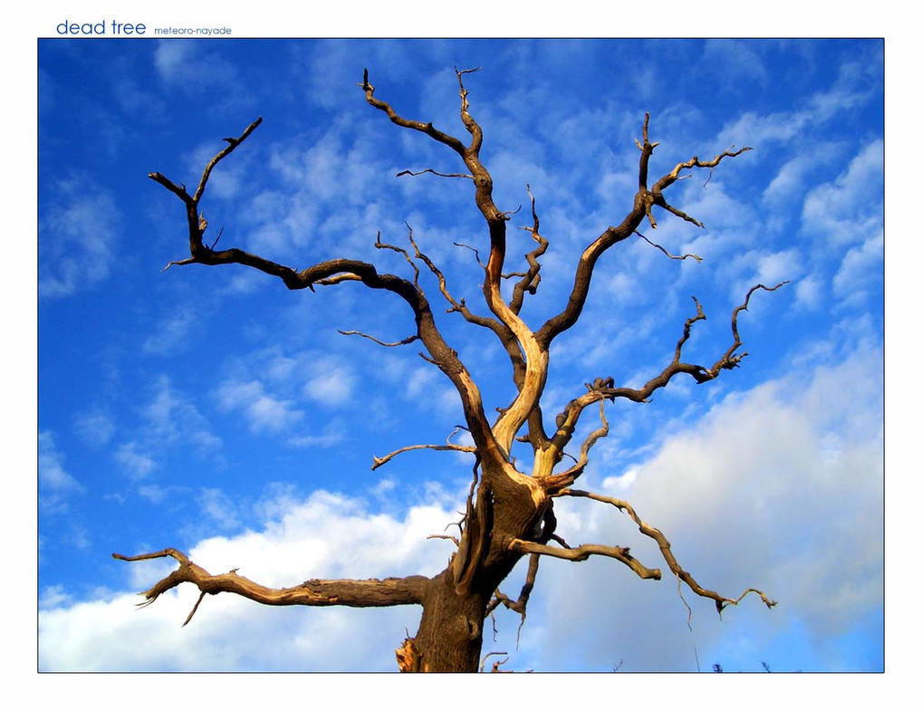 1000+ Images About Beautiful Dead Trees On Pinterest
