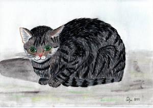 Cat by sivkolin