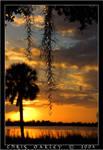 Sunset Silhouette II
