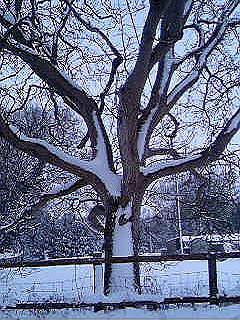 tree by mellza