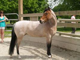 Pony Stock I by TMPhotographie