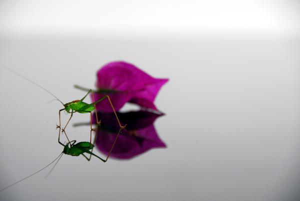 Grasshopper by ntscha