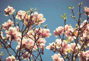 magnolia by ntscha