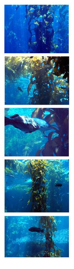 kelp forests I