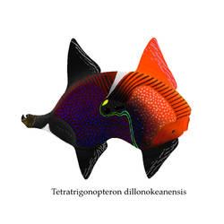 Tetratrigonopteron