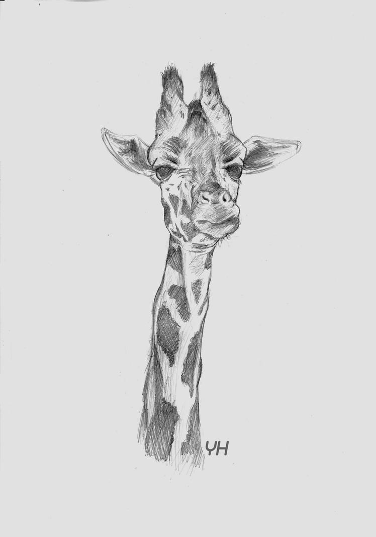 Giraffe by Unilt