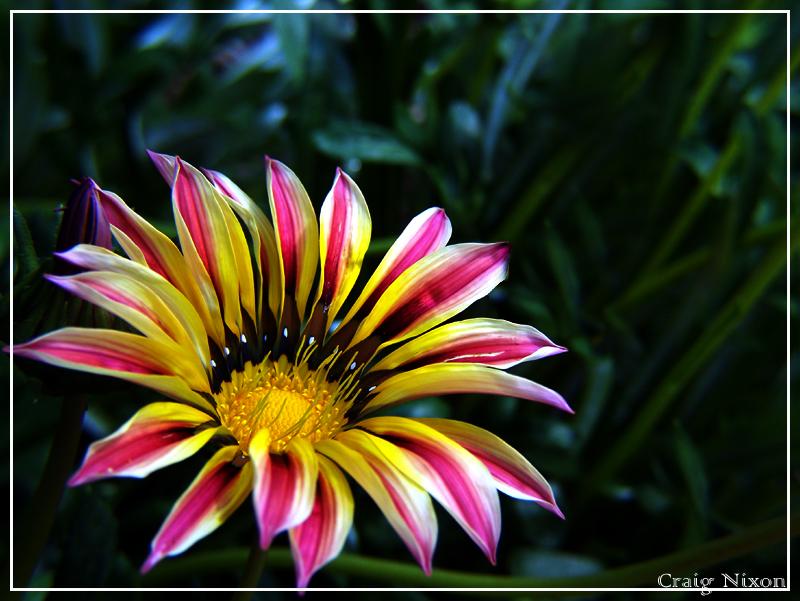 Flowers II by Ashatay