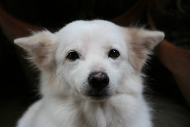 My doggie 'Yuki' by alky-holic