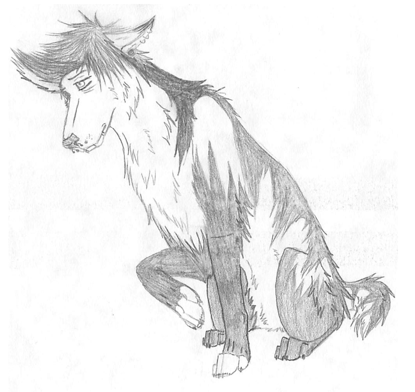 shadowwolf737's Profile Picture