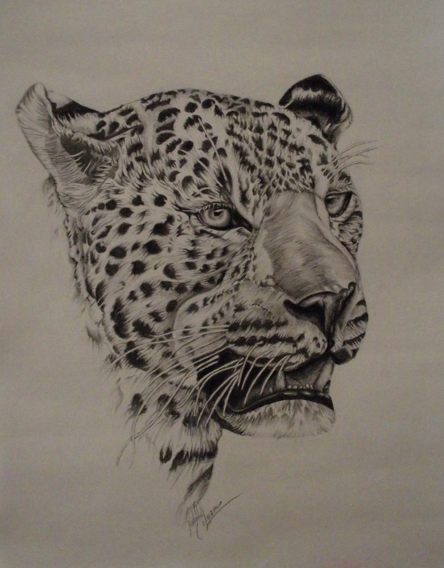 Leopard Pencil Drawings Leopard Drawing by all...