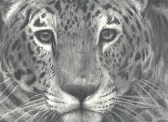 Jaguar by Tsyris
