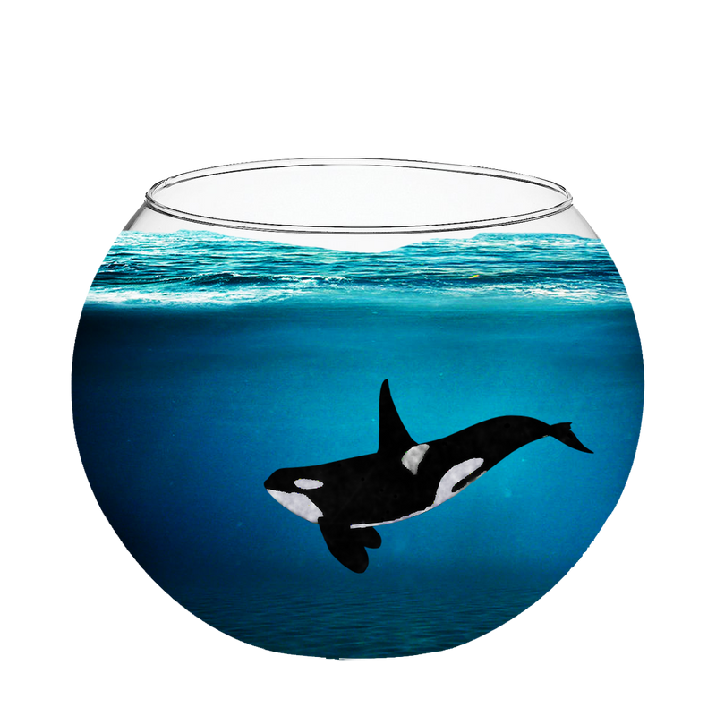 Orca in a fishbowl by fabala thropp on deviantart for Legal fish bowl