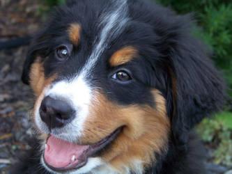 mountaindogs   Explore mountaindogs on DeviantArt