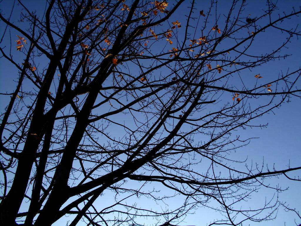 Autumn Sky I