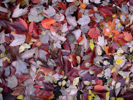 Scattered Leaves I
