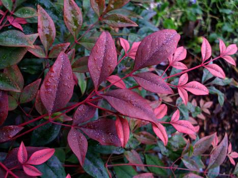 Velvet Leaves I