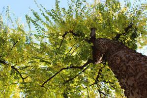 Tree by kincsesfuzet