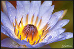 the flower revolutions