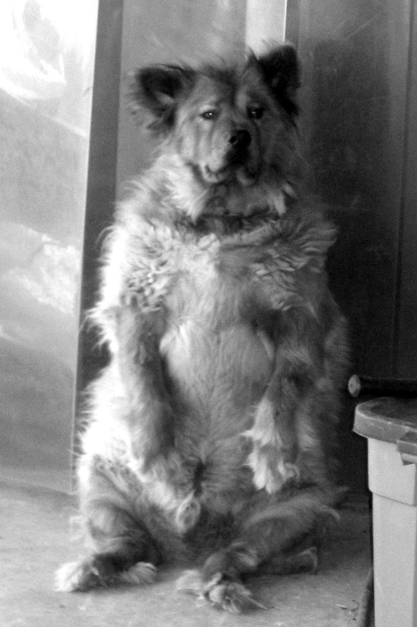 Oliver...Bear or Dog? by Emagyne