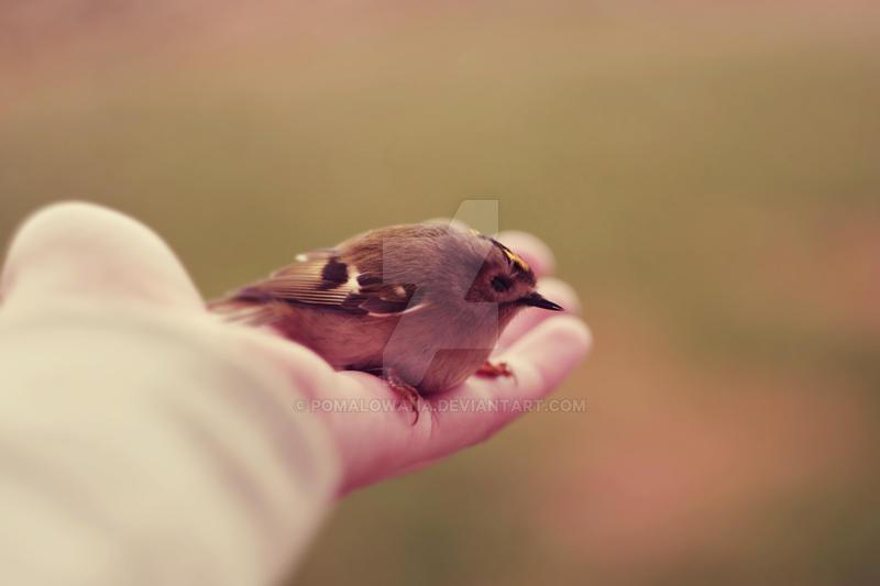 My little bird — 3