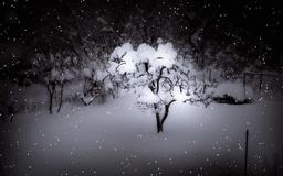 Winter night - animated scene by Purxle