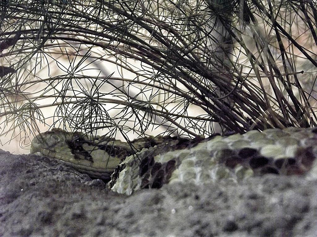 Resting viper by giantrider8