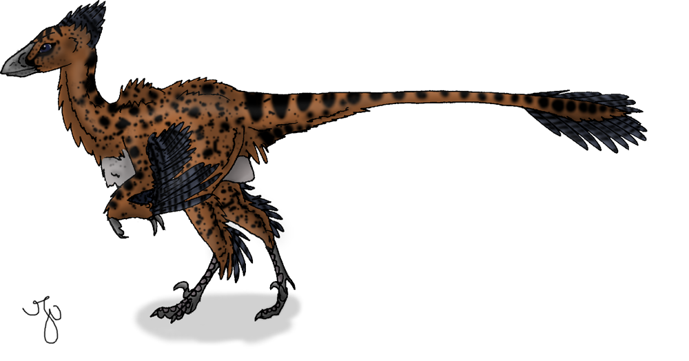 Bambiraptor-little dromeosaur