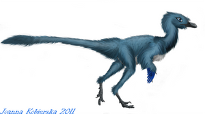 Troodon female