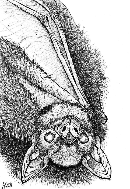 Inktober - Day 24 Blind by BlueFluffyDinosaur