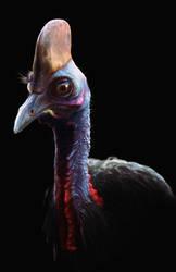 Cassowary bird by BlueFluffyDinosaur
