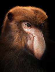Proboscis monkey by BlueFluffyDinosaur