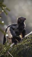Anchiornis in rain