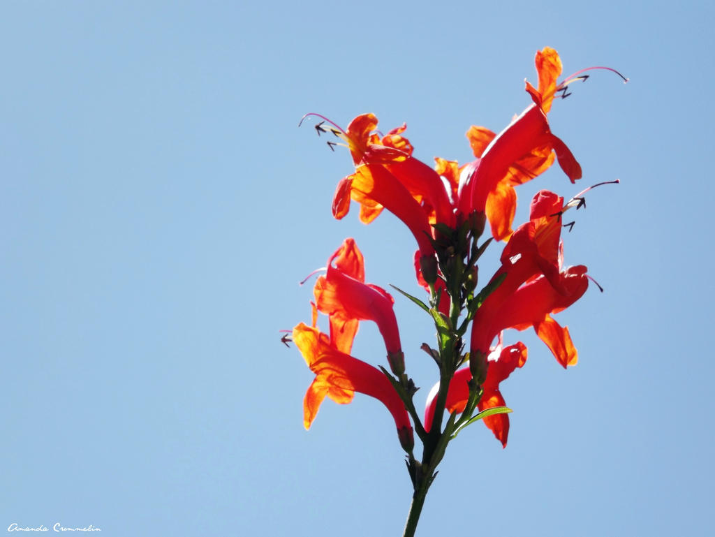 Bright Flower by ArtCromm