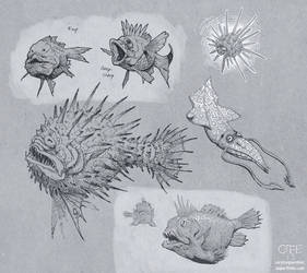 Reef Fauna