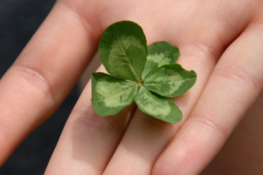Some Clovers Have Five Leaves or More  Softpedia
