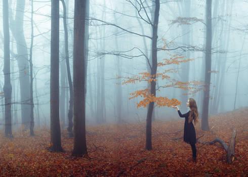 last fragments of autumn