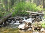 Shackleford Creek II
