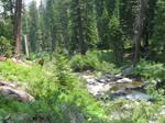 Shackleford Creek III