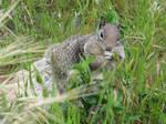 Squirrel Cheeks