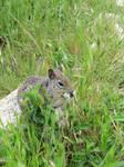Squirrel Cheeks II