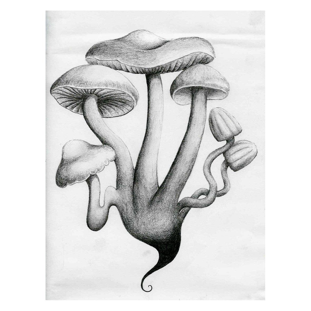 Magic Mushroom Drawings Magic Mushrooms...1181