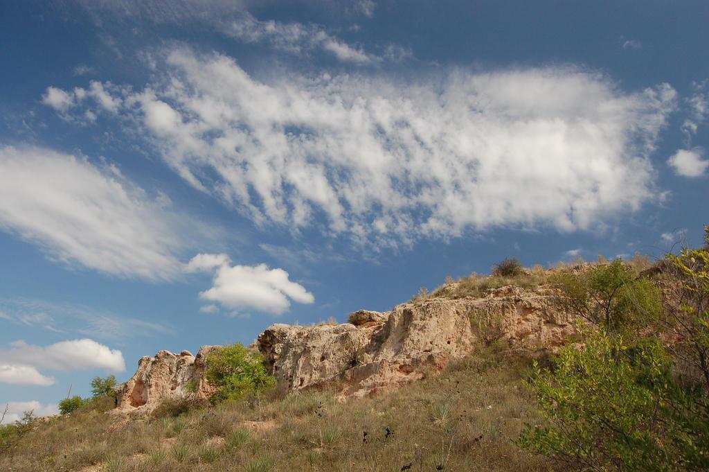 Where the Buffalo Roamed by Metzae