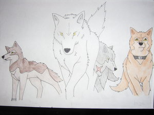Wolfs Rain Coloured