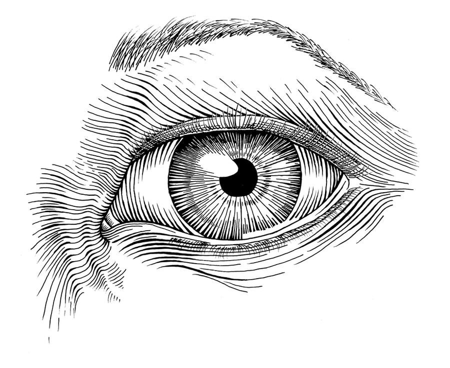 Eye in Pen and Ink by elizabethnixon