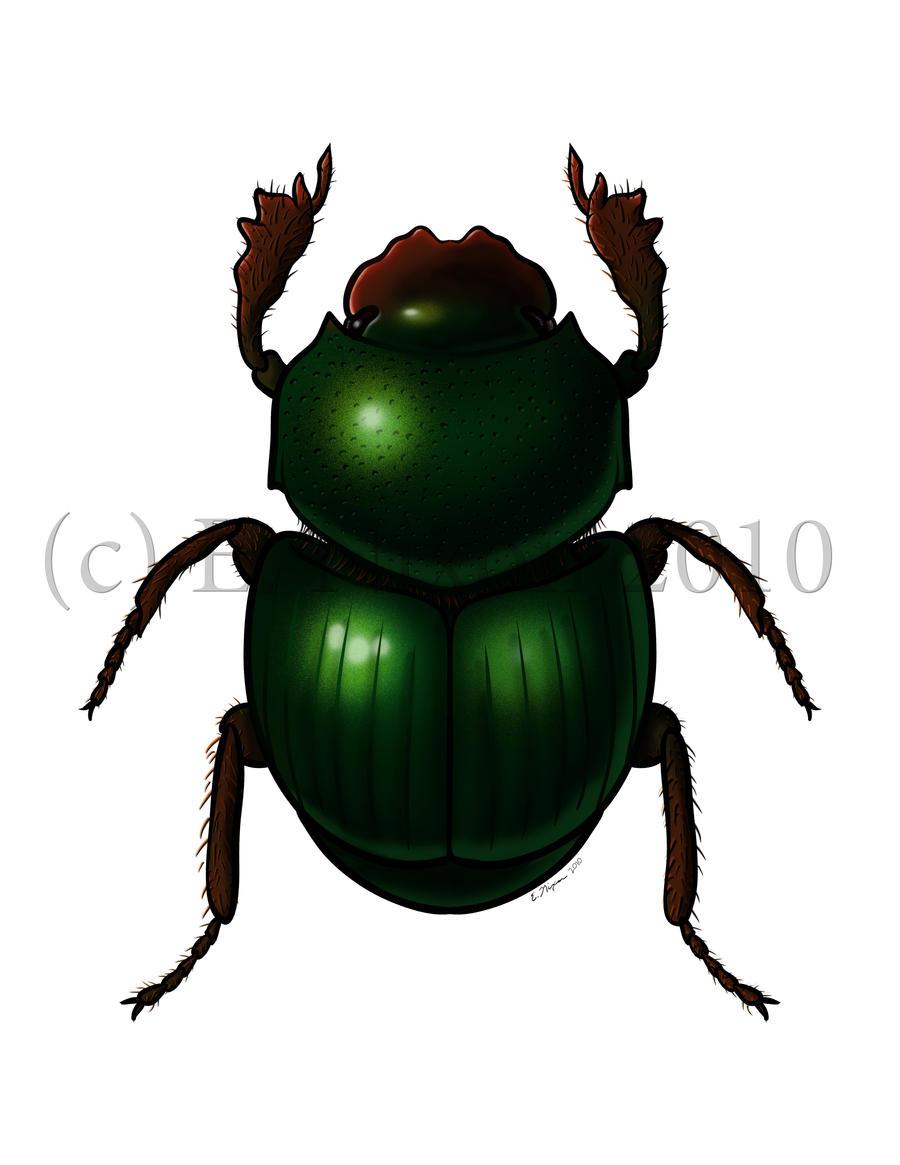 Scarab Beetle by elizabethnixon on DeviantArt