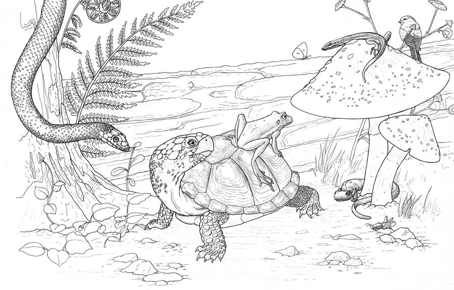 Amphibians and Reptiles Pen and Ink (WIP) by ...