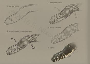 Snake Scale Layout (colubrids) by elizabethnixon