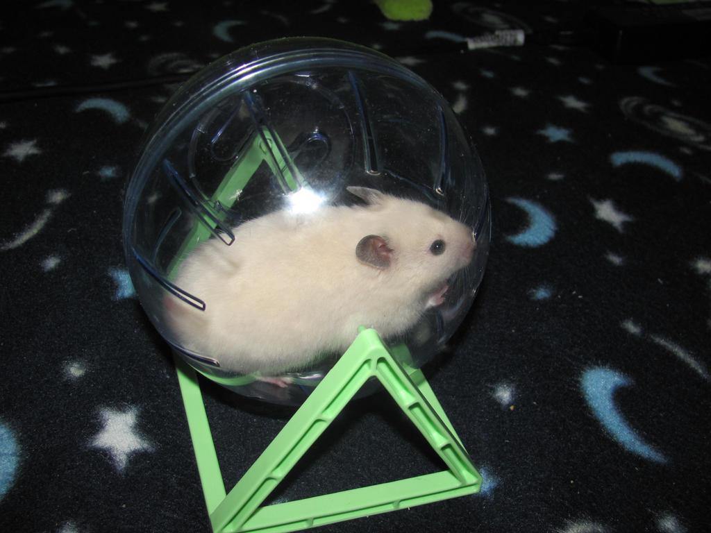 hamster by RoxyRocz