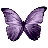 Buterfly PNG2 by MyPluginbaby13